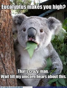 If eucalyptus makes you high, why do they put it in lotions and shampoo?