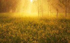 Golden Morning.