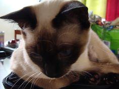 My beautiful Lulú...