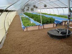 Greenhouse Aquaponics System | Check out my personal Aquaponics project at www.davaoaquaponics.com