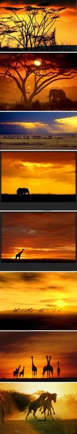 10 Worlds most romantic sunset to one! Harmony between man and nature, man and animal, prairie sunrise, sunset wonderland wonderful! ! Elephants, lions, leopards, rhino, buffalo, antelope, giraffes, hippos, baboons and wolves, day and night wandering in the grasslands - Kenya Travel, Call of the Wild!Want to go?