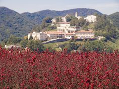 The hills of Mt. St. Mary's by Seldom Scene Photography, via Flickr. Campus Calm visited Mount Saint Mary's College   in California and their campus is stunning! Maria Pascucci, Campus Calm's founder, spoke at their 2nd Annual Women's Leadership Conference.