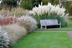 Beautiful ideas for landscaping with ornamental grasses used as an informal grass hedge, mass planted in the garden, or mixed with other shrubs and plants.  #LandscapingTips&Tricks