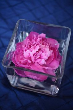 pink peony or other flower floating in square vase