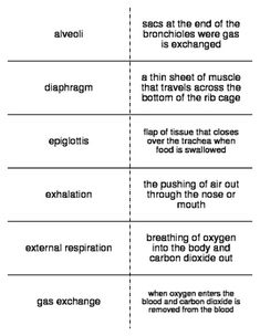 Respiratory system slp pinterest respiratory system flash cards covering the terminology that will be introduced when discussing the respiratory and excretory systems ccuart Choice Image