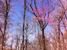 Gorgeous redbuds are blooming on the southern end of the Natchez Trace! Natchez Trace, Spring Time, Scenery, Southern, Bloom, Plants, Travel, Viajes, Landscape