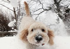 Dogs Frolic In The Snow