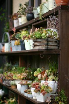 rustic wabi sabi garden shelves via www.pithandvigor.com