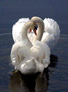 Clan Swan