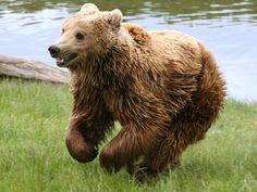 L'ours le plus heureux du monde.