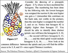 Fibonacci Sequence In Pineapples   fascinating appearances of the Fibonacci numbers in nature ...