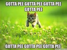 #catsmemes,funny animal pictures, cat memes, just like cat, funniest animals, cat fun, cat funny, cat, cats, cat cute, cat stuff,#funny, #funnyanimals, #funnycats#barcelona, #atentado tarragona, #atentado terrorista