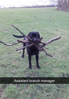 Assistant Branch Manager