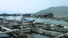 Outbreaks of diseases in aquaculture.