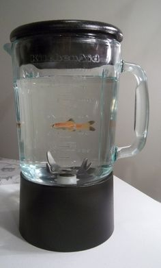 1000 images about fish bowl ideas on pinterest fish for Fish in a blender