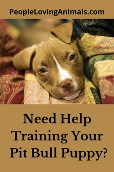 Doggy Dan's Perfect Puppy Program is the best puppy training for your Pit Bull puppy. It's effective and affordable. Puppy Training, Dog Training
