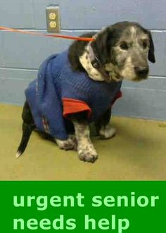 #A273370 (Moreno Valley, CA) Shelter staff named me CISCO and I am a neutered male, black and white Terrier mix and Basset Hound. The shelter thinks I am about 14 years old. I have been at the shelter since Jan 24, 2015 and I may be available for adoption on Jan 31, 2015 at 3:30PM. https://www.facebook.com/135559229932205/photos/a.382565775231548.1073741961.135559229932205/422072061280919/?type=1