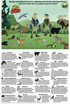 Wild Kratts Animals Info