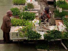 hortas urbanas  #people #market #plants #veggies #aromaticplants #livingincascais #visitcascais by margarida.brito