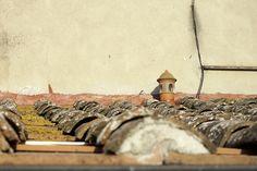 Italy castagneto carducci #italy #CastagnetoCarducci #roof