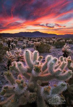 Sean Bagshaw - Desert Symphony - Joshua Tree, California