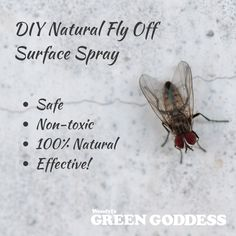 DIY Natural Fly Off Surface Spray Flies have multiplied around the country with the recent warm weather and we've had emails asking if we have any natural spray products that will stop. Homemade Cleaning Products, Cleaning Recipes, Natural Cleaning Products, Cleaning Hacks, Kitchen Surface, Fly Spray, Cleaning Spray, Plant Therapy, Green Goddess