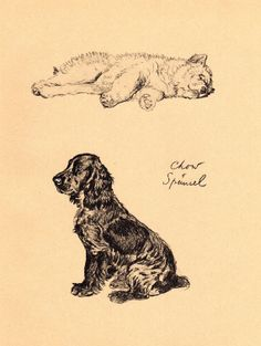1934 Vintage Dog Print Chow Spaniel Cecil by AntiquePrintGallery, $25.00