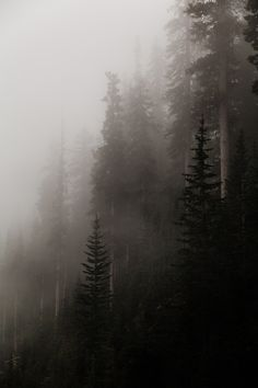 forest covered in fog Foggy Forest, Forest Mountain, Forest Wallpaper, Rocky Mountain National Park, Dark Places, Nature Photos, Painting Inspiration, Aesthetic Wallpapers, Mists