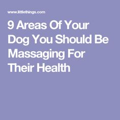 9 Areas Of Your Dog You Should Be Massaging For Their Health