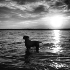 She loved the water. Original photo by Maria Firkaly. Follow me on Instagram username crazymutts. #dog #photography