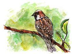 watercolor, sparrow
