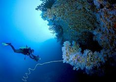 The Great White Wall with Paradise Taveuni