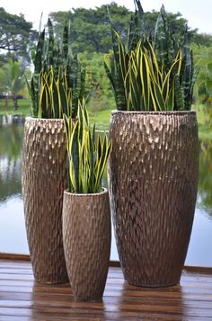 Image result for tall plants in amber pots