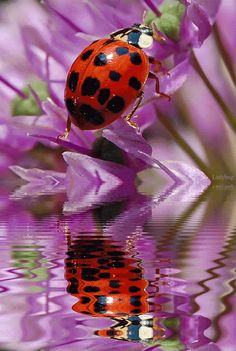 Animated Insects, Beautiful Flowers, Animated Flowers, Animated Graphics, Insects, Bugs, Ladybugs, Animated Ladybugs, Keefers Photo by Keefe...