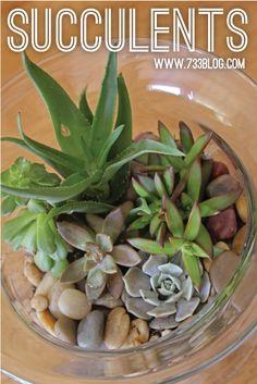 seven thirty three - - - a creative blog: Succulent Dish Garden (Creating & Caring)