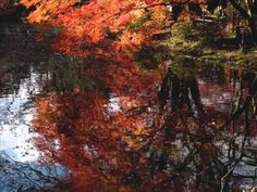 Stephane Grappelli & Yehudi Menuhin - Autumn Leaves - YouTube