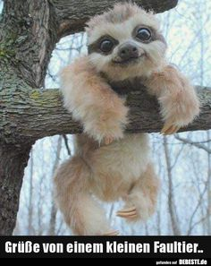 Here is a picture of a baby sloth. You can also find a VIDEO of a REAL sloth on the IG of who is an amazing VO artist that I met this weekend at Im totally watching this sloth video AGAIN after I post this. Baby Animals Super Cute, Cute Little Animals, Cute Funny Animals, Creepy Animals, Baby Animals Pictures, Cute Animal Pictures, Animals And Pets, Smiling Animals, Animal Pics