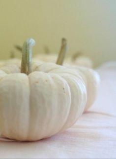 White pumpkins