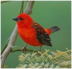 lovely little bird
