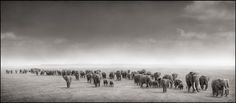 Elephant exodus, Amboseli, 2004 Nick Brandt: I love this image from one of my favourite wildlife photographers. Perhaps a large print for somewhere in my new home? ❤️