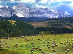 Papel de Parede Gratuito de Natureza : Ovelhas no Pasto - Colorado