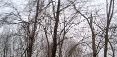 bleedtrees