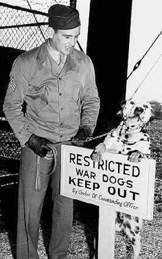 Dalmatian war dog with American Soldier, WWII