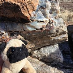 Mr. Pug at the Crystal Forest part of the Petrified Forest National Park in Arizona. 🌲  #petrified #petrifiednationalforest #nationalforest #travel #mrpug #pugs #rocks #petrifiedwood #petrifiedforest #petrifiedforestnationalpark #arizona #roadtrip #crystal http://ift.tt/1Q1HRsx