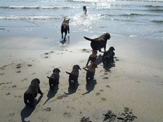 This could have been us with Maggie Mae's last litter at the beach