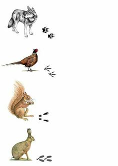 Forest Animals, Farm Animals, Animals And Pets, Animal Activities For Kids, Animal Crafts For Kids, Animal Footprints, Mushroom Crafts, Animal Tracks, Survival Weapons