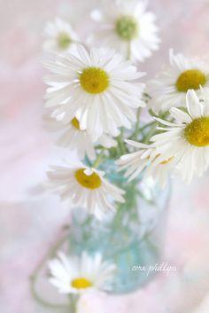 jar of daisies