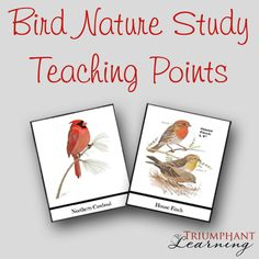 Bird Nature Study {free printable} | Triumphant Learning