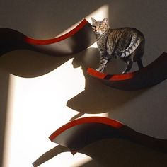 These climbing shelves will add some style to your home decor and allow your cat to safely climb to higher levels.   Catster