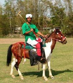 In 1977, the Manipur Horse Riding and Polo Association was established to promote the Manipuri pony breed and the game of polo. In recent years, breed numbers have decreased, and estimates place the breed at somewhere between 2,300 and 1,000 in population in the 21st century. Population numbers continue to dwindle in part due to high numbers of ponies being smuggled into Myanmar after being purchased or stolen. Manipur polo player in traditional attire. © Indigenous Horse Society of India
